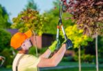 dons-tree-services-tree-pruning.jpg