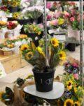 Bunch of Sun Flowers SSFM Logan City.jpg